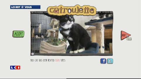 Adopter un chat sur catroulette