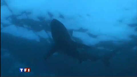 Les attaques de requins se multiplient