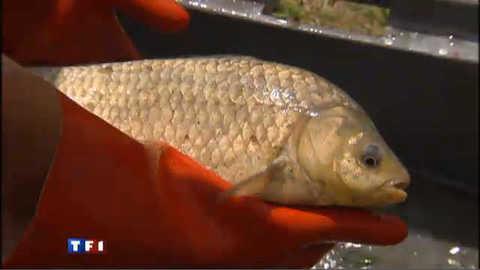 Baisse des eaux : la pêche électrique pour sauver les poissons