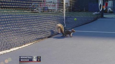 Benneteau chasse l'écureuil