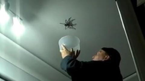 Big_Spider_Attacks_Daddy