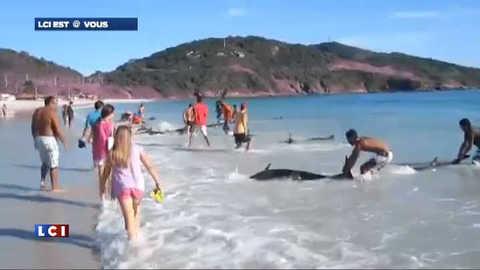 Brésil : des dauphins échoués sauvés in-extremis