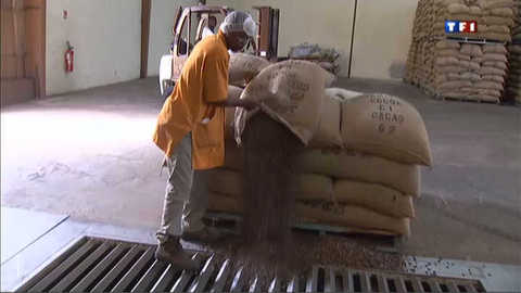Le cacao, l'or noir de la Côte d'Ivoire