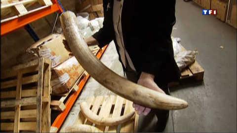 Cameroun : 200 éléphants abattus en un mois dans un parc