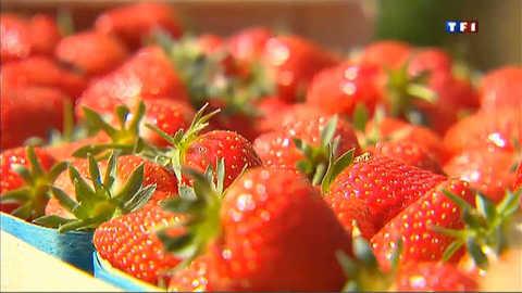Carpentras, capitale de la fraise française