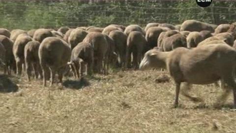 Un centre de formation pour bergers! (PACA)