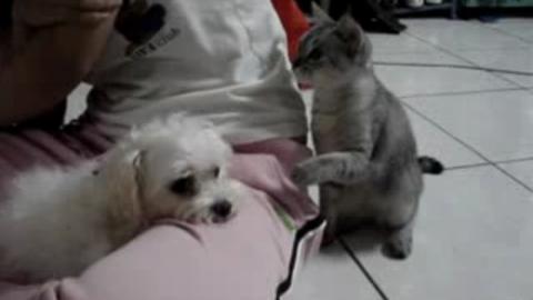chat-joue-avec-chien