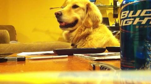 Le chien qui aime le son de la guitare de son maitre