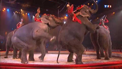 Le cirque Bouglione fait la part belle aux animaux