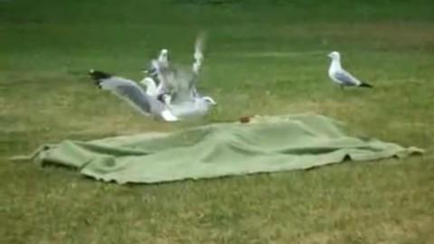 comment attrapper un oiseau