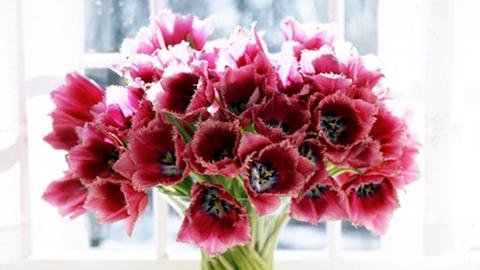 Comment faire vivre plus longtemps les fleurs
