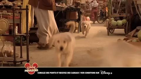 Les Copains Chasseurs de Trésors - Maintenant en DVD