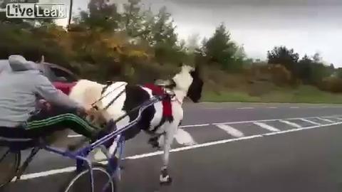 Une course-poursuite entre la police et des chevaux