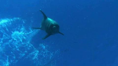 Dauphins et baleines 3D - Bande annonce