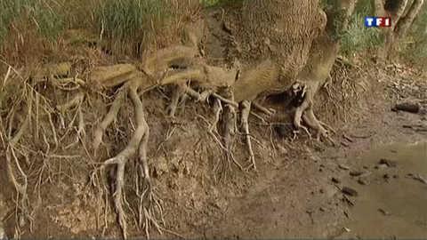 En Charente, les agriculteurs s'inquiètent de la sécheresse