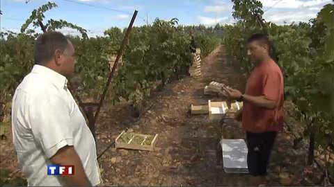 Espagnols cherchent désespérément emploi saisonnier en France