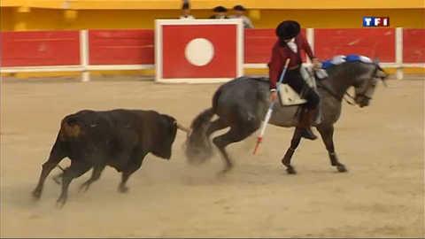 La feria de Saintes-Marie célèbre le cheval