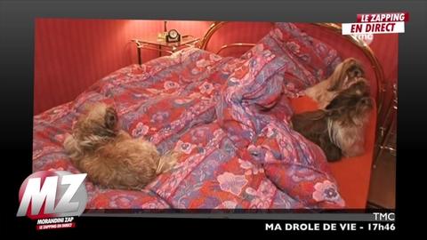 Morandini zap : ils vivent avec 8 chiens