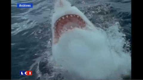 Mort d'un surfeur australien attaqué par un requin
