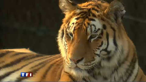 Naissances en série pour le zoo d'Amnéville