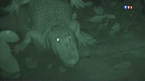 Une nuit avec les alligators