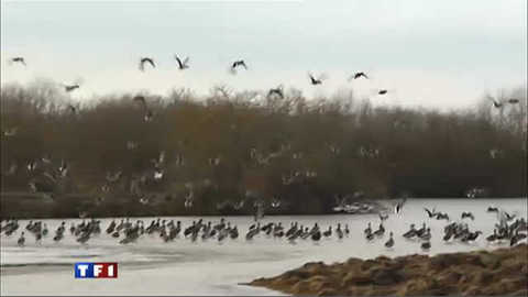 Les oiseaux migrateurs, coincés entre le froid et la chasse