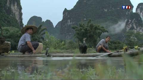 La pêche aux cormorans, un art chinois en voie de disparition