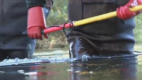 Pêche électrique pour compter les poissons (Mussy-sur-Seine)