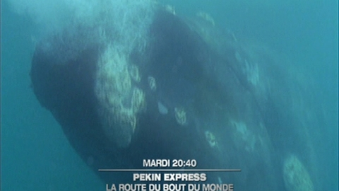 Pékin Express / Episode 10 Rendez-vous mardi 15 juin mai à 20:40