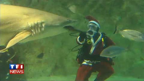 Un Père Noël en immersion au milieu des requins