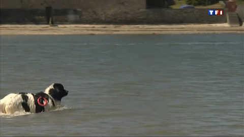 A la plage, les chiens sauvent des vies