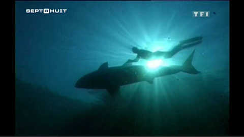 Plongée au milieu des grands requins blancs