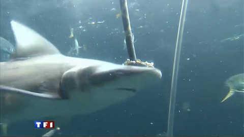 Plongeon dans l'aquarium Nausicaa de Boulogne-sur-mer
