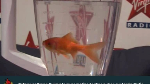 Un poisson rouge broyé dans un mixeur sur Virgin Radio