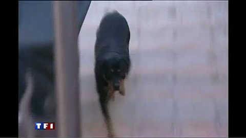Prison ferme pour un maître-chien
