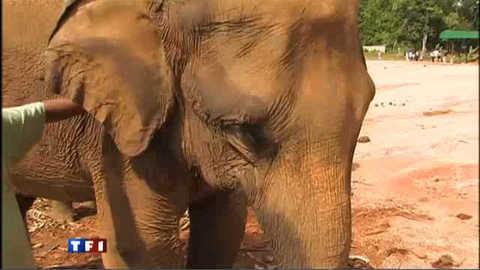 Au Sri Lanka, on aime les éléphants