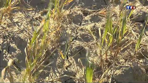 Le Sud de la France touché par la sécheresse