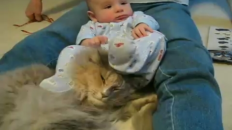 The world s most patient cat