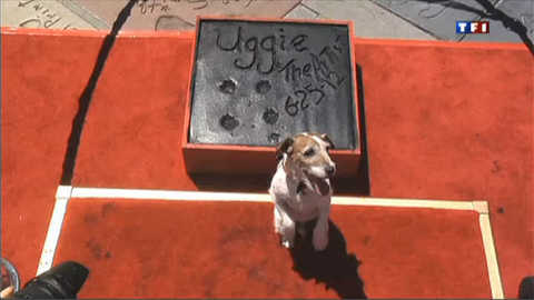 "Uggie de ""The Artist"" inaugure son étoile sur Hollywood Boulevard"