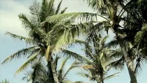 XXXX Island : l'île réservée aux hommes